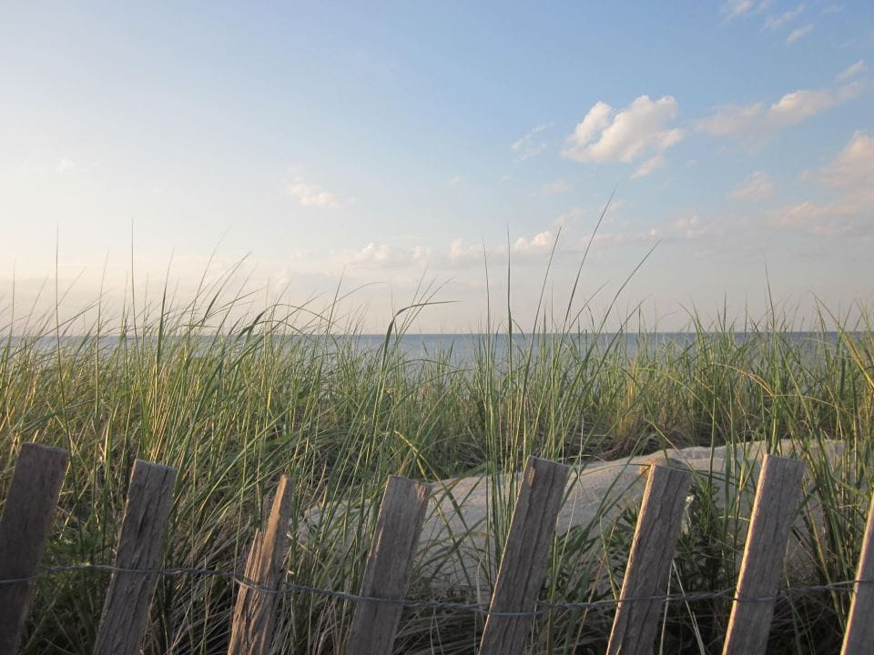 Beach View with Sea Grass